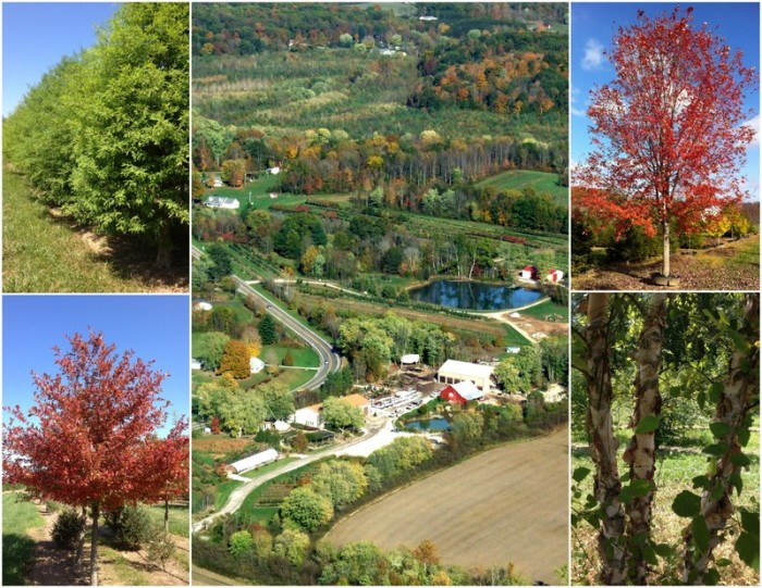 DHS, collage, aerial view, dhs aerial photo, tree farm collage, Designscape, Designscape Aerial