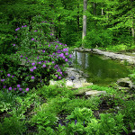 designscape, bloomington, landscaping, water features, woodland design, pond, shade garden