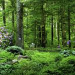 softscape, woodland, shade garden, naturalistic, forest garden, giant allium