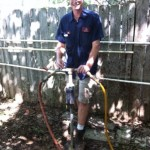 tree injections, tree care, tree service, root injections